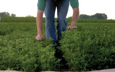 Prairie Creek Seed